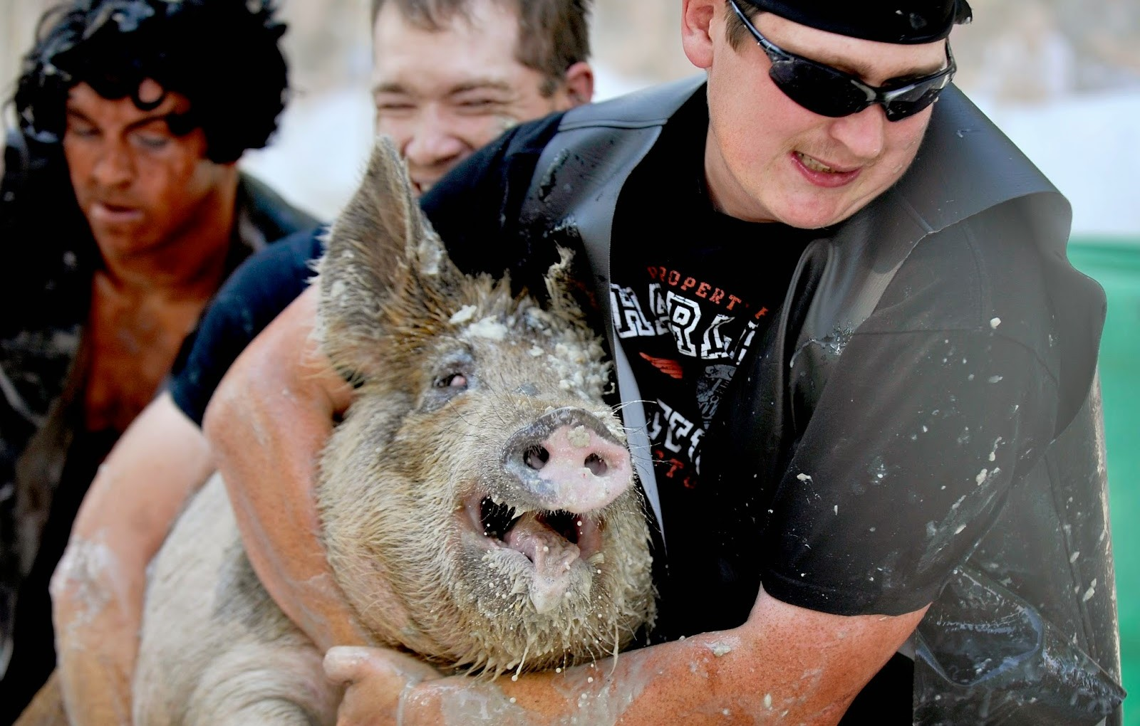 Greased Pig Race
